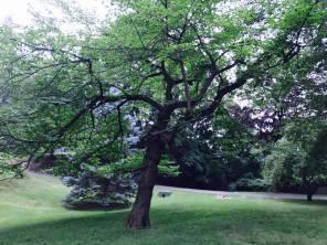 gouveiapark1